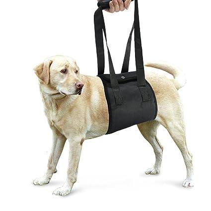 WINOMO perro arnés apoyo rehabilitación para asistencia Hind débil ...