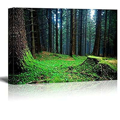 Delightful Object of Art, Beautiful Scenery Landscape Foggy Forest at The Morning at Autumn Wall Decor, With Expert Quality