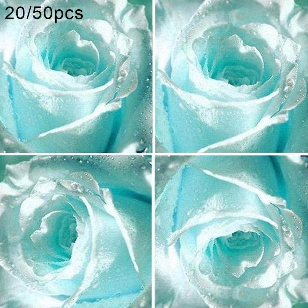 Uticon 20 / 50pcs Raras Semillas De Flores Azul Claro Fragante Jard¨ªN De Rosas Bonsai Plant Decor - Azul Claro 20pcs Semillas Color De Rosa