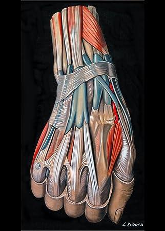 Amazon.de: Vintage Anatomie Hand und Handgelenk von Elisa Schorn ...