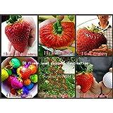 果物の種、200 PCS大きなイチゴ種子、6希少品種の植物の種子、イチゴ種子、甘くておいしい果物を登ります