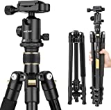 """Camera Tripod,K&F Concept 62"""" Compact Light Aluminium Tripod with Quick Release Plate, Ball Head and Carrying Bag for Travel for DSLR Canon Nikon Sony Camera-Golden"""