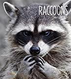 img - for Raccoons (Living Wild (Hardcover)) by Melissa Gish Creative Education (2015-08-06) book / textbook / text book