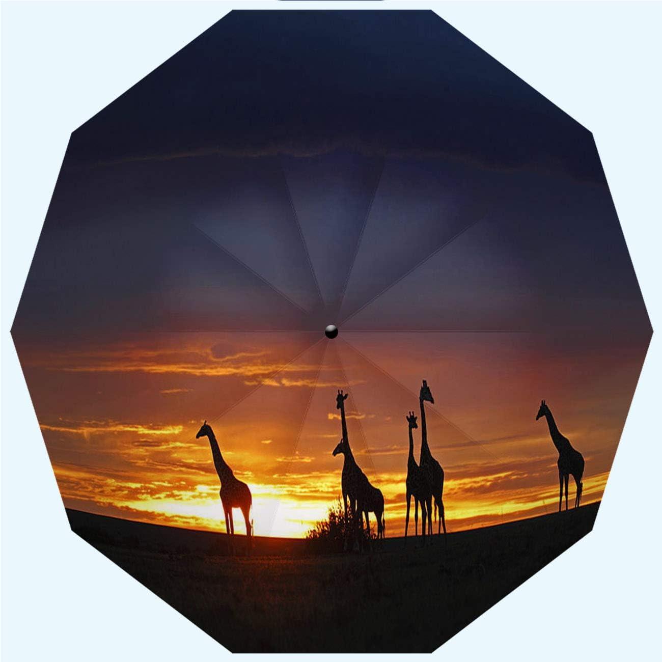 Men 42 Inches 10 Ribs Automatic Opening and Closing,Sunrise in The Jungle,Windproof Ladies RLDSESS Jungle Travel Folding Umbrella Rainproof