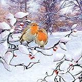 5 Servietten Rotkehlchen Christmas ROBIN Serviettentechnik Vogel Vögel Weihnacht