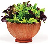 1000+ Lettuce Mix Seeds Please Read! This is A