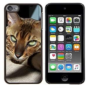 Bengala Savannah Cat Crazy Eyes Sunlight- Metal de aluminio y de plástico duro Caja del teléfono - Negro - iPod Touch 6