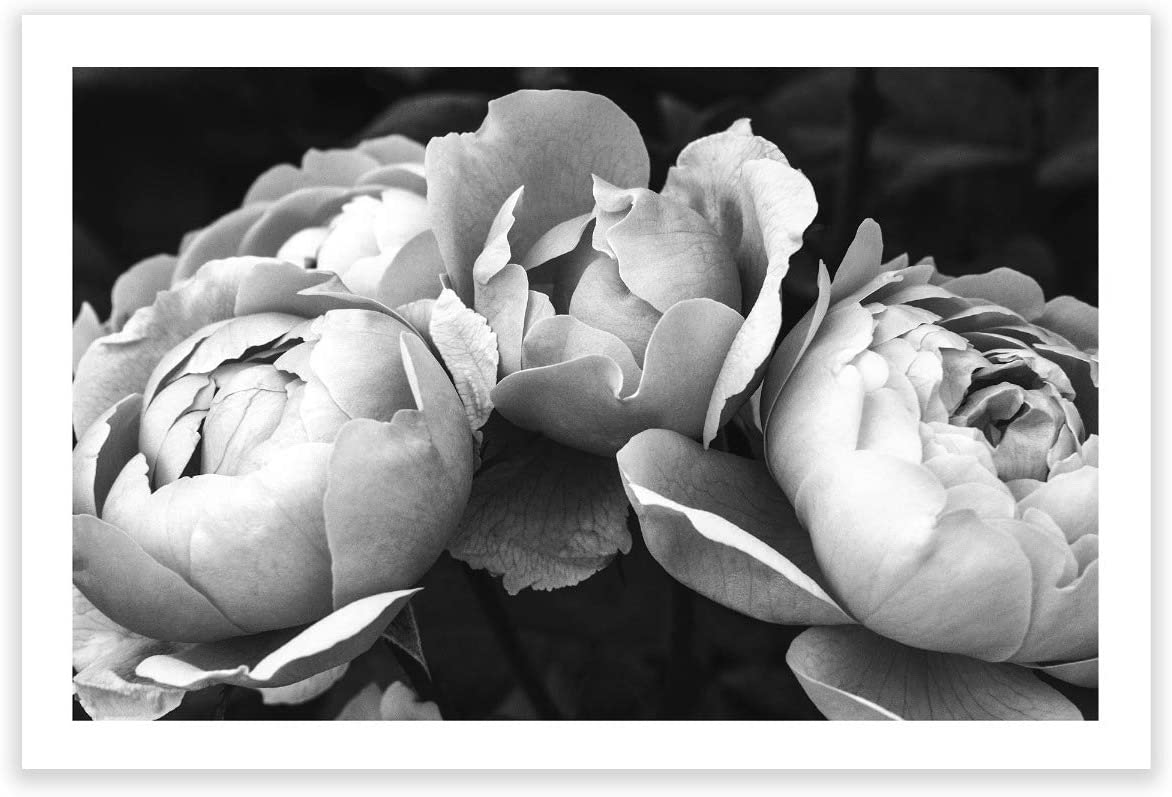 Humble Chic Wall Art Prints - Unframed HD Printed Plants Picture Poster Decorations for Home Decor Living Dining Bedroom Bathroom College Dorm Room - Black & White Peonies BW, 24x36 Horizontal