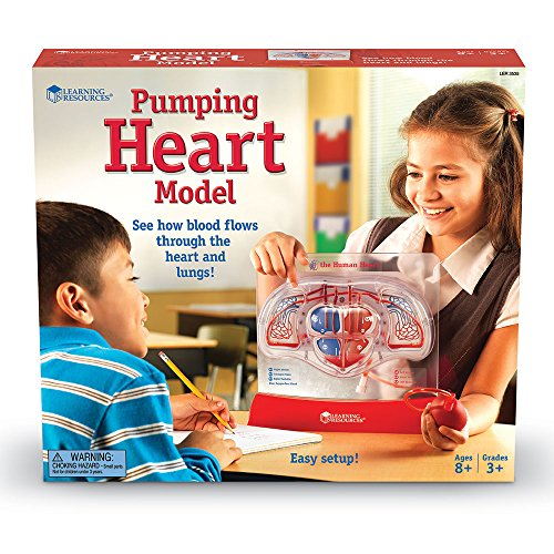 Learning Resources Pumping Heart Model by Learning Resources (Image #3)
