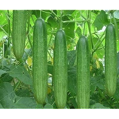 Cucumber agri Green Seeds (avg 30-50) Seeds 3 : Garden & Outdoor