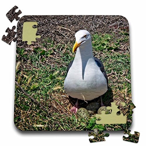 Birds Boehm Game (3dRose Boehm Photography Bird - Seagull Warming Eggs in the Grass - 10x10 Inch Puzzle (pzl_282392_2))