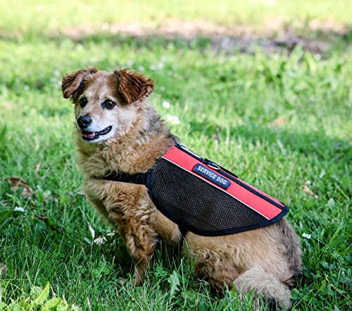 Liopard ExoMesh Service Dog and Emotional Support Dog Vest Harness - All Sizes (Patch: EMOTIONAL SUPPORT, Girth 12