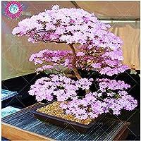 Bonsai japonés árbol de Sakura Semillas Semillas raras japonesas flores de cerezo Flores en bonsai, Rosa Prunus…