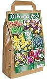 Kit Lampadina verde Brokers Ltd, 6 diverse varietà uso navigazione R hlingsblumen pacchetto di 101 lampadine