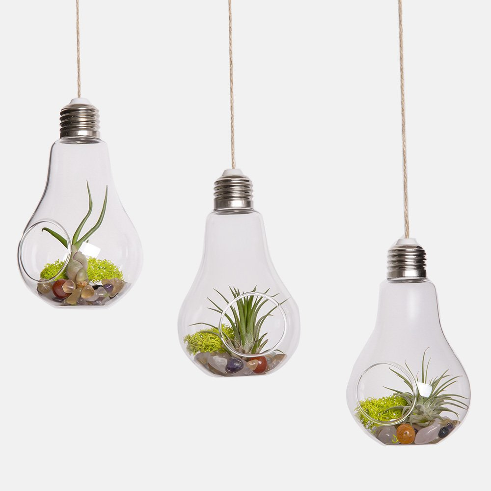 amazoncom mkono 3 pack light bulb hanging plant terrarium glass vase for succulent u0026 air plant patio lawn u0026 garden