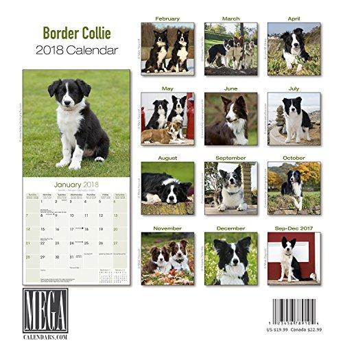 Border Collie Calendar 2018 - Dog Breed Calendar - Premium Wall Calendar 2017-2018 Photo #3