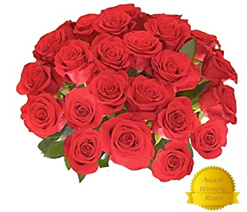Amazon Com Flower Delivery 25 Red Premium Fresh Roses Free Gift