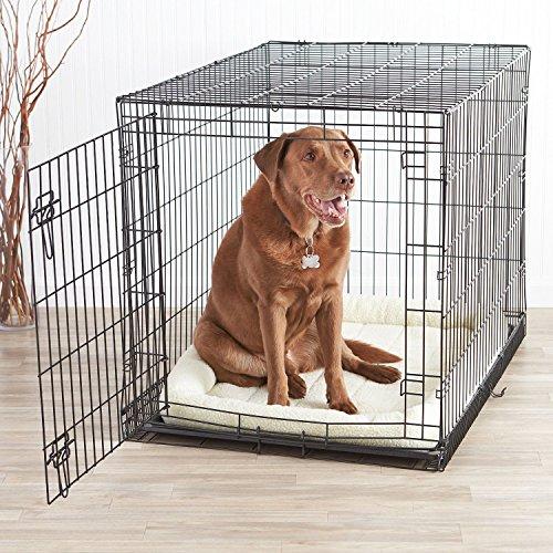 AmazonBasics Single-Door Dog Crate and Padded Bolster Bed - Large by AmazonBasics