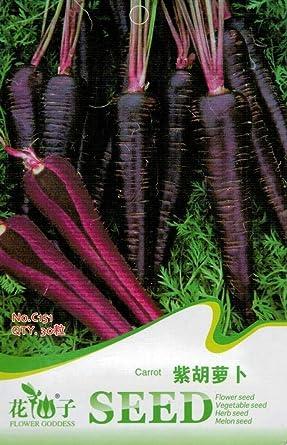 Scoutseed Paquete Original 30 Semilla De Zanahoria Morada Daucus Carota Sativa C151 Amazon Es Alimentacion Y Bebidas Las zanahorias son ricas en carotenos, ese antioxidante que contiene provitamina a tan necesario para nuestra salud general. scoutseed paquete original 30 semilla