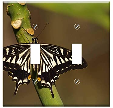 Switch Plate Double Toggle Swallowtail Butterfly Old World Swallowtail Amazon Com