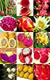 Dragon Fruit Mix, Edible Fruits Hylocereus Undatus Fragrant Cactus Seed 50 Seeds offers