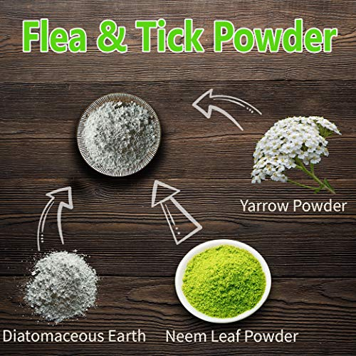 Blue Lily Organics Neem Leaf Powder | USDA Certified Organic | Azadirachta  Indica Leaves | Vegan, Non-GMO & Gluten Free |Great for Improving Immunity,