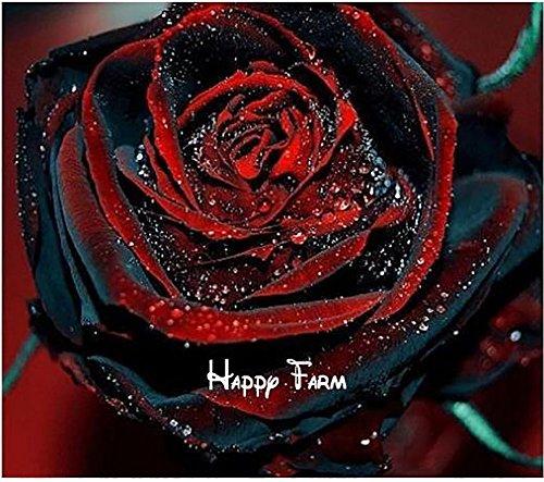 The Best Seller 100 seeds,Red Black Rare Rose Plant Seedling Garden Seed