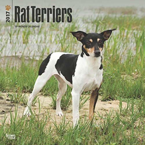 2017 Rat Terrier Wall Calendar Dogs {jg} Best Holiday Gift Ideas - Great for mom, dad, sister, brother, grandparents, , grandchildren, grandma, gay, lgbtq.