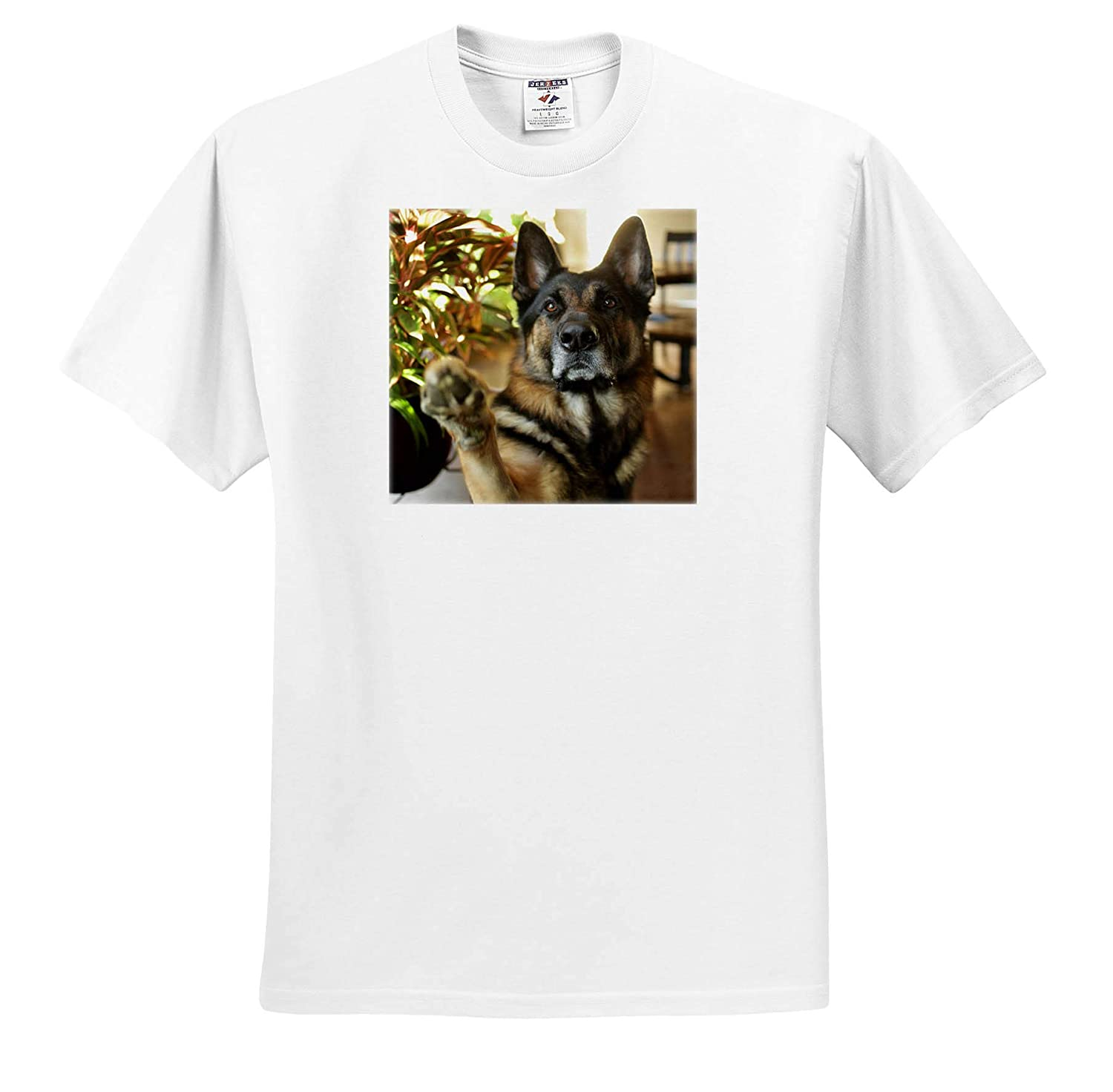 - T-Shirts Animals Photograph of a Regal German Shepherd Dog offering a paw to Shake 3dRose Stamp City