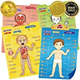 BEST LEARNING i-Poster My Body - Interactive Educational Human Anatomy Talking Toy to Learn Body Parts, Organs, Muscles and Bones for Kids