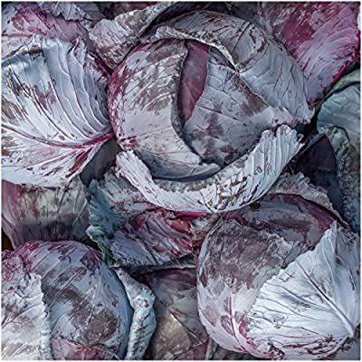 Package of 300 Seeds, Mammoth Red Rock Cabbage (Brassica oleracea) Non-GMO Seeds By Seed Needs