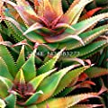 Brand New! 100pcs Rare Aloe Seeds Perennial Plant Grass Bonsai Home & garden seeds of hope