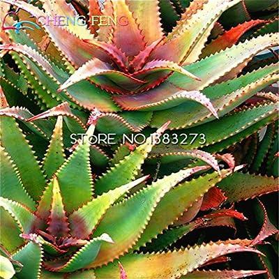 Brand New! 100pcs Rare Aloe Seeds Perennial Plant Grass Bonsai Home & garden seeds of hope