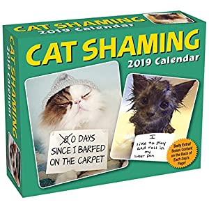 cat shaming 2019 day to day calendar