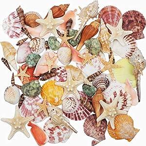 61J6E5iAtPL._SS300_ Seashell Wedding Favors & Starfish Wedding Favors