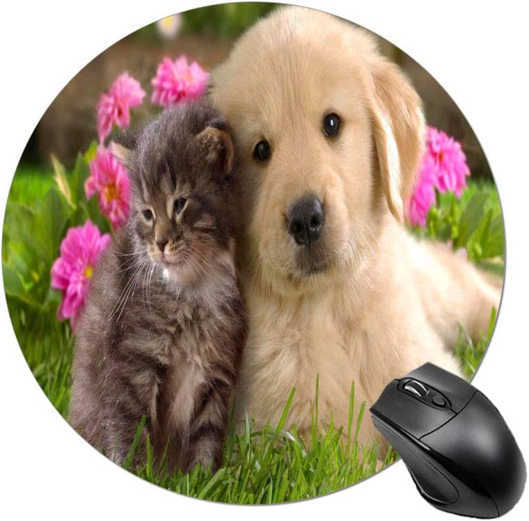 Funda de Almohada para mejoras del hogar perfeconeLindos Perros y Gatos Toman fotosFunda de Almohada para sofá y automóvil 1 Paquete 19.68 x 25.6 Pulgadas / 50 cm x 65 cm: Amazon.es: Hogar