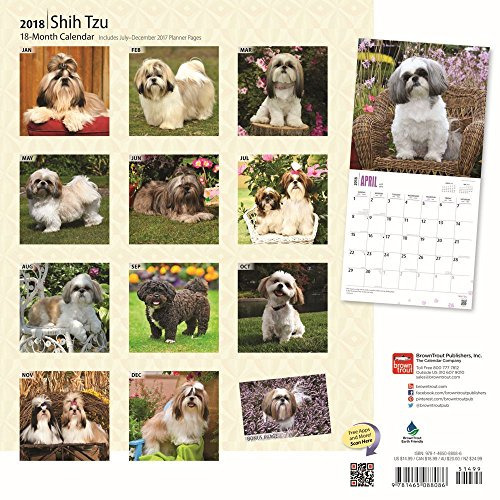 Shih Tzu 2018 Wall Calendar Photo #3
