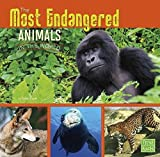 img - for The Most Endangered Animals in the World (All About Animals) book / textbook / text book