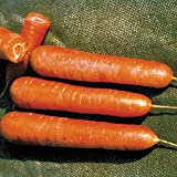 buy Park Seed Nantes Organic Carrot Seeds now, new 2019-2018 bestseller, review and Photo, best price $4.95