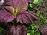David's Garden Seeds Mustard Greens Japanese Giant Red SL0932 (Red) 500 Non-GMO, Heirloom Seeds
