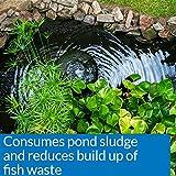 API POND-ZYME SLUDGE DESTROYER Pond Cleaner With