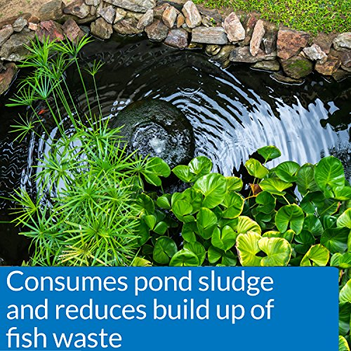 API POND-ZYME SLUDGE DESTROYER Pond Water Cleaner With Barley 1-Pound Container by API (Image #2)