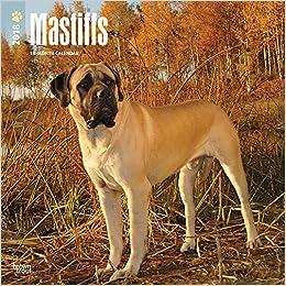 Amazon com: Mastiffs 2018 12 x 12 Inch Monthly Square Wall