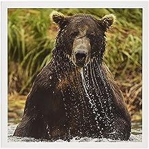 """3dRose US, Alaska, Katmai Park, Brown Bear- US02 JMC0015 Greeting Cards, 6"""" x 6"""", Set of 6 (gc_142024_1)"""