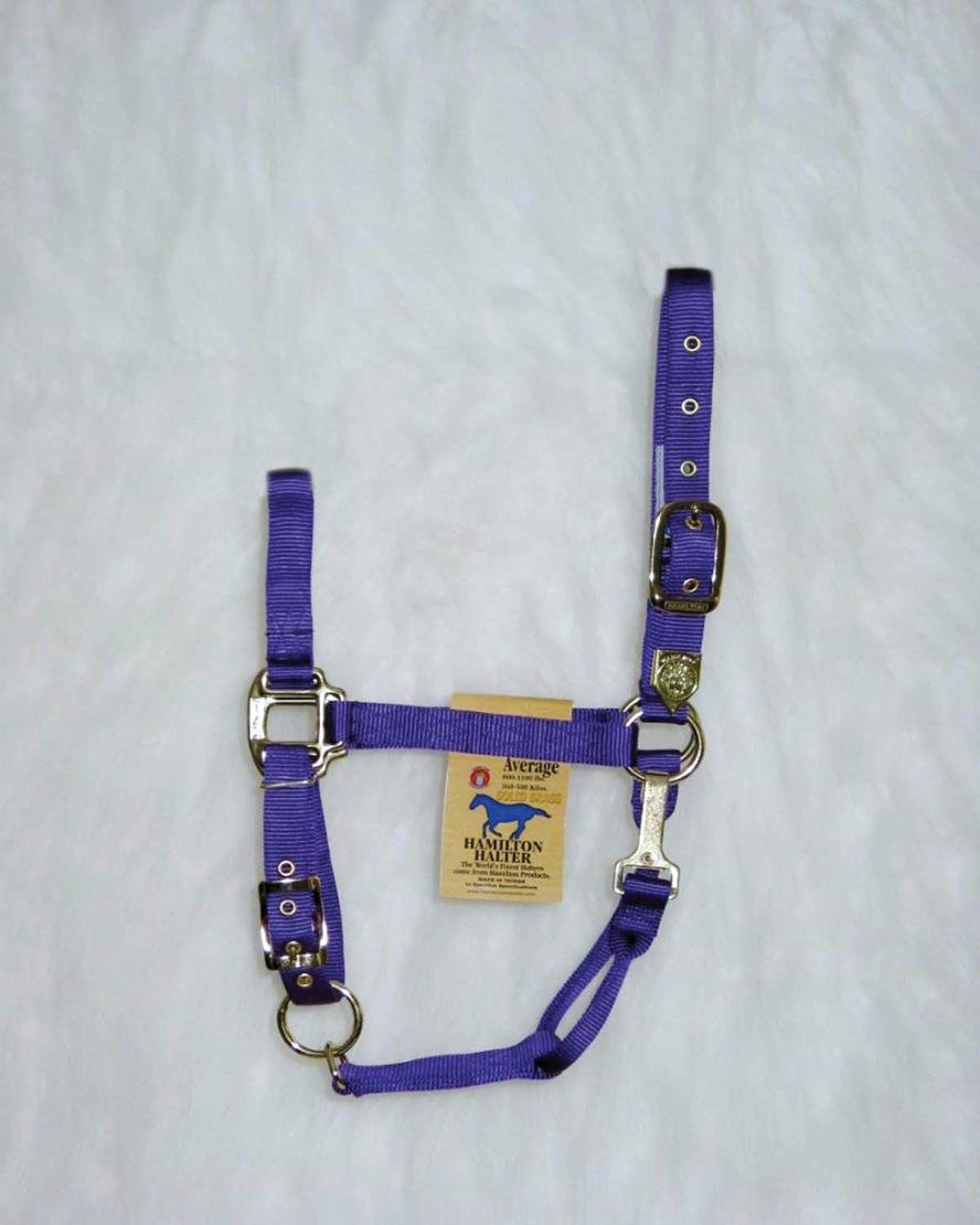 DPD Adjustable Chin Horse Halter with SNAP - Average - Purple