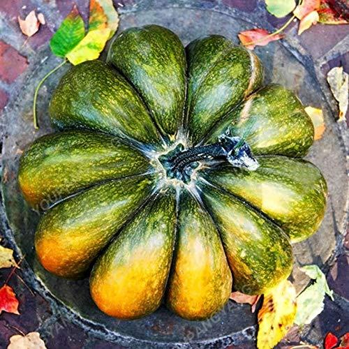 (WildyMountain 20pcs Ornamental Pumpkin Plants Colorful Organic Pepo Pumpkin Plants for Vegetable Cucurbita Decorative Home Fruit Garden)