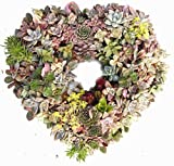 "15"" Sphagnum Moss Living Wreath Heart Form, Natural-organic Original!"