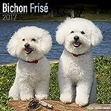 Bichon Calendar 2017 - Bichon Frise - Dog Breed Calendars - 2016 - 2017 wall calendars - 16 Month by Avonside