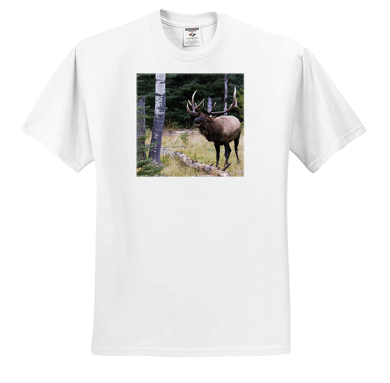 ts/_313982 Bull Elk Bugling 3dRose Danita Delimont Adult T-Shirt XL Elk