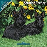 Scottish Terrier 2010 Wall Calendar